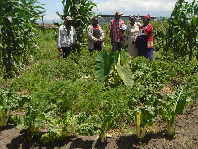 Farmers admire a healthy vibrant organic crop after implementing Sustainable Agriculture Principles