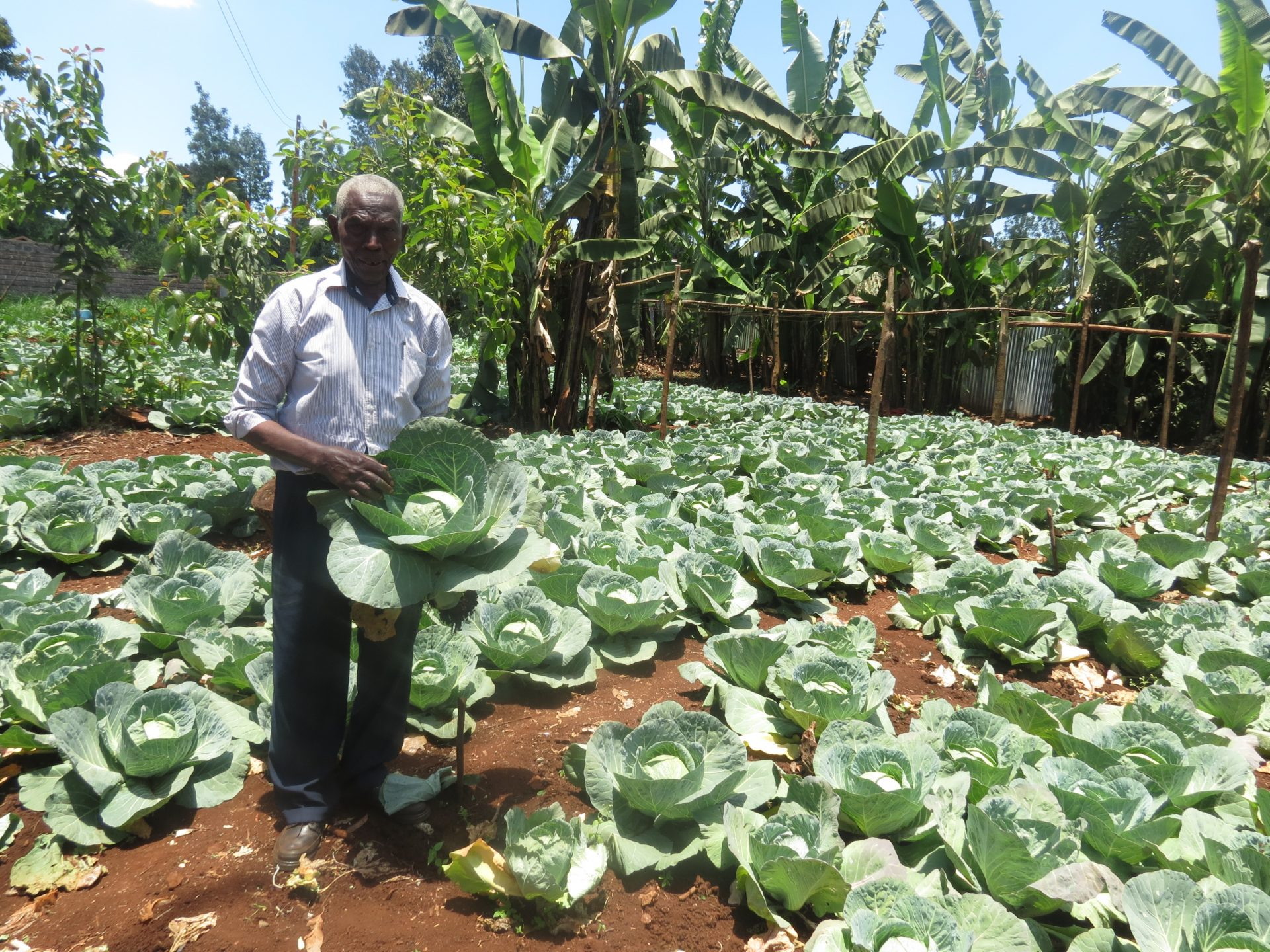 Successfully trained farmer in Sustainable Agriculture (SA)
